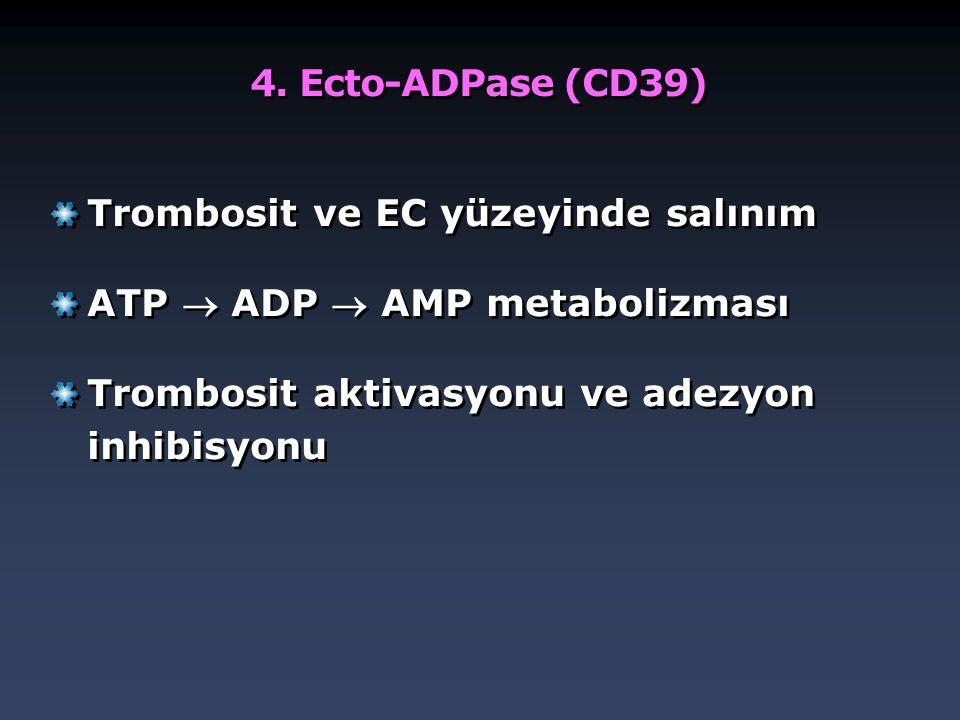 4. Ecto-ADPase (CD39) Trombosit ve EC yüzeyinde salınım.