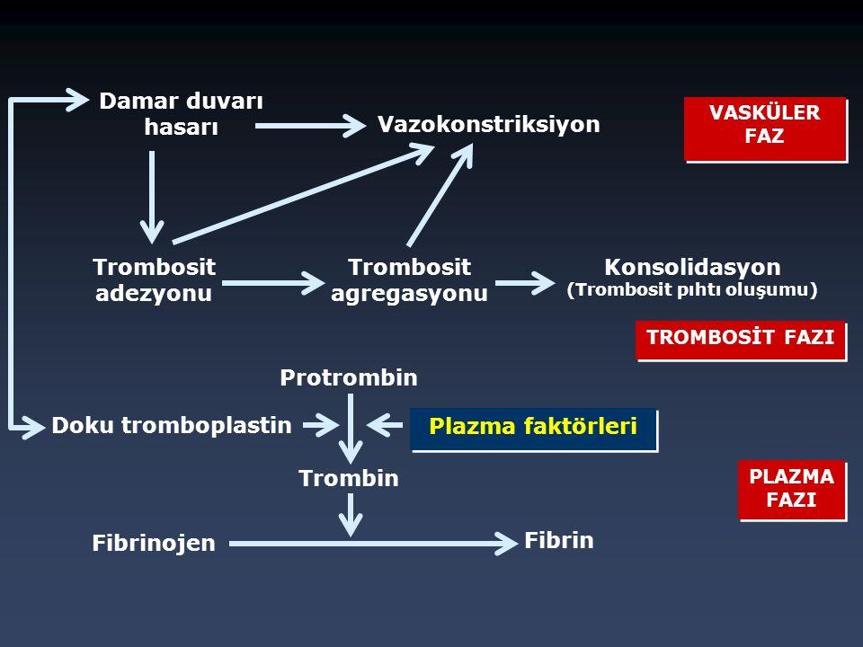 Trombosit agregasyonu Konsolidasyon (Trombosit pıhtı oluşumu)