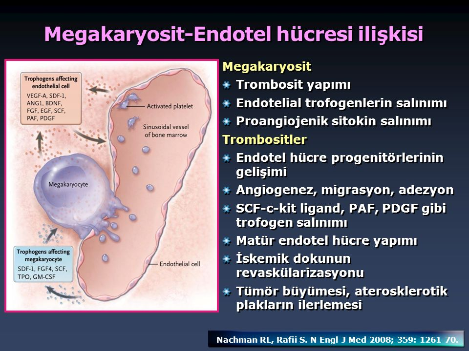 Megakaryosit-Endotel hücresi ilişkisi