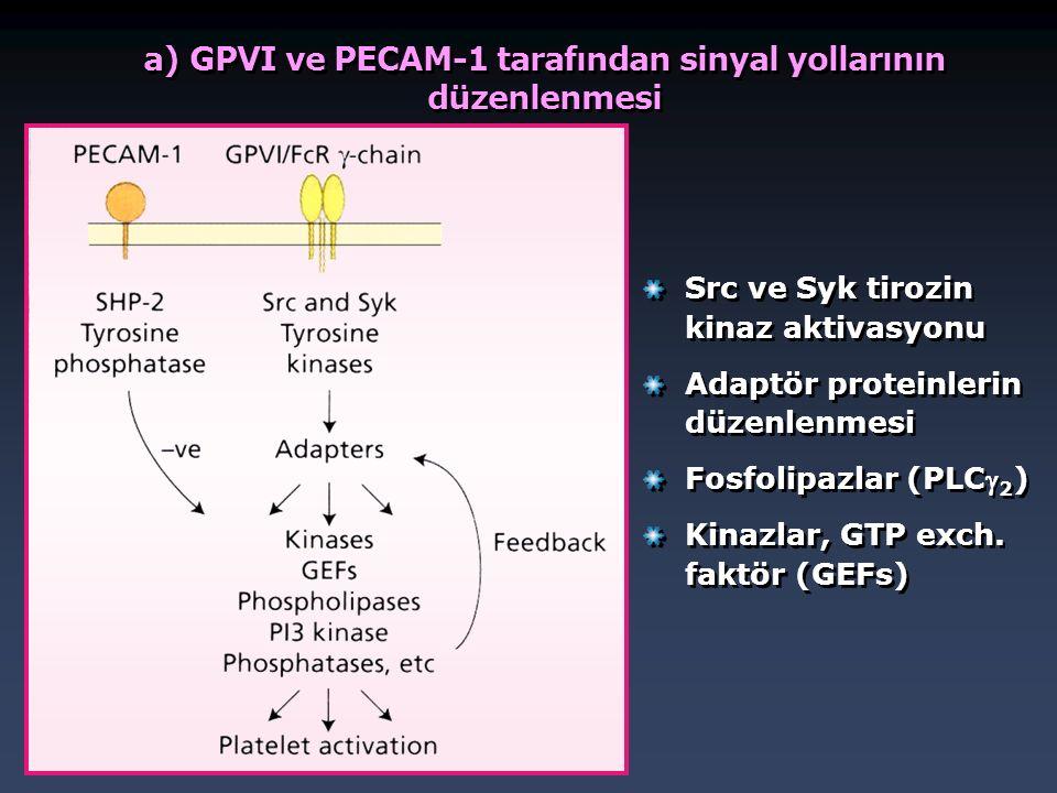 a) GPVI ve PECAM-1 tarafından sinyal yollarının düzenlenmesi