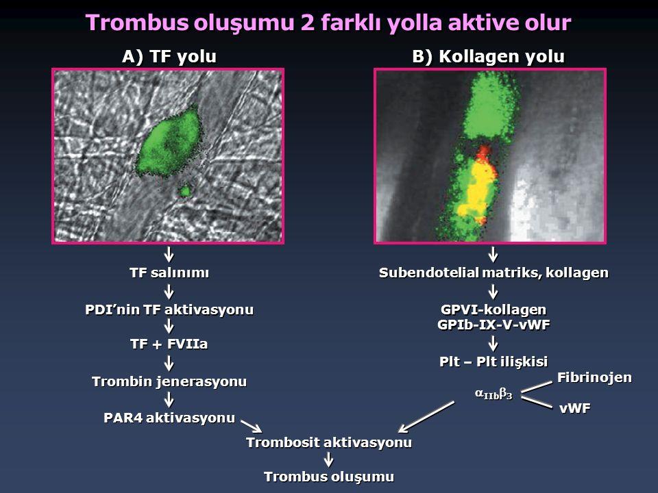 Trombus oluşumu 2 farklı yolla aktive olur
