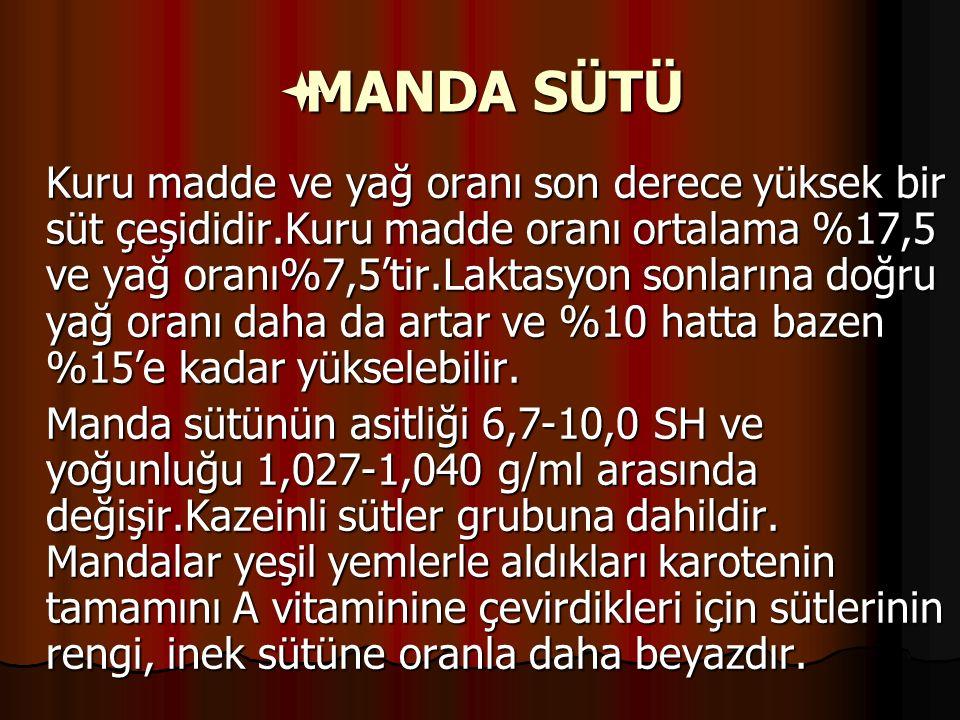 MANDA SÜTÜ