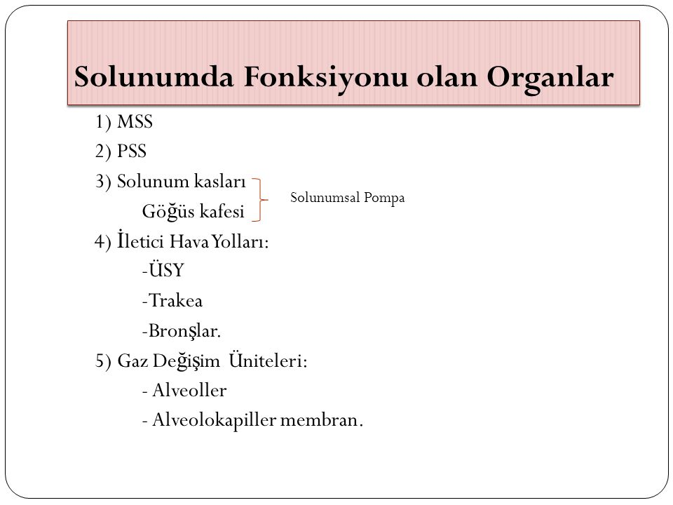 Solunumda Fonksiyonu olan Organlar