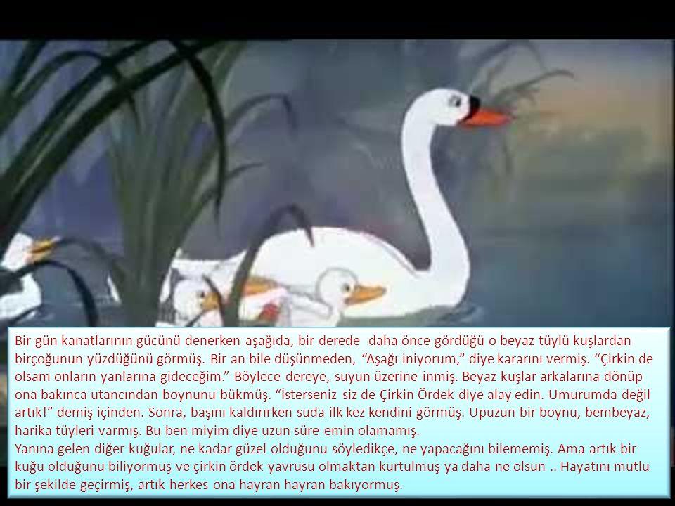 Bir gün kanatlarının gücünü denerken aşağıda, bir derede daha önce gördüğü o beyaz tüylü kuşlardan birçoğunun yüzdüğünü görmüş.