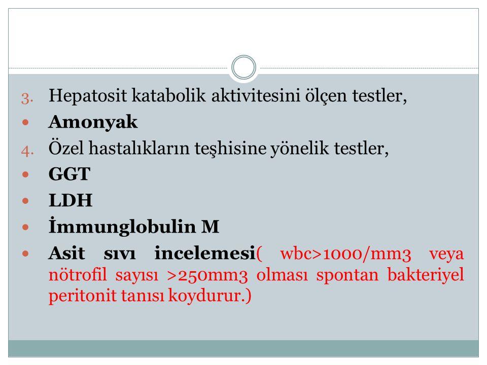 Hepatosit katabolik aktivitesini ölçen testler,