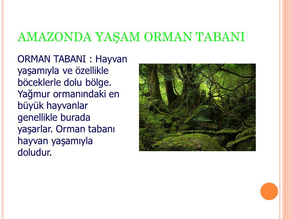 AMAZONDA YAŞAM ORMAN TABANI