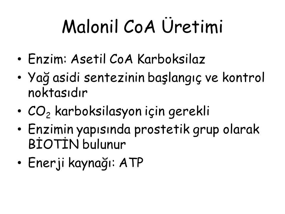 Malonil CoA Üretimi Enzim: Asetil CoA Karboksilaz
