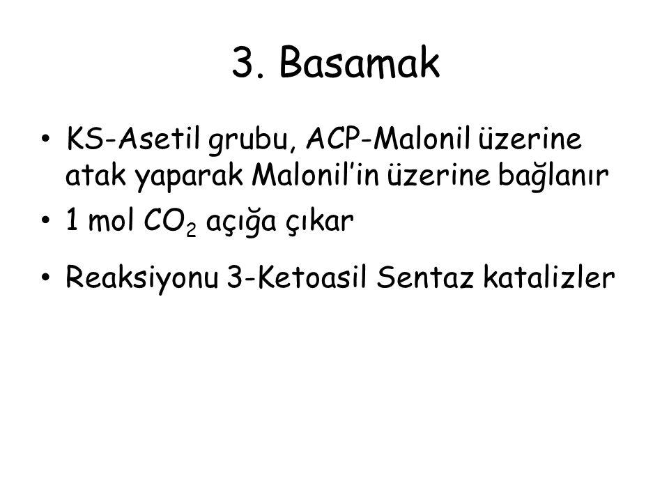 3. Basamak KS-Asetil grubu, ACP-Malonil üzerine atak yaparak Malonil'in üzerine bağlanır. 1 mol CO2 açığa çıkar.
