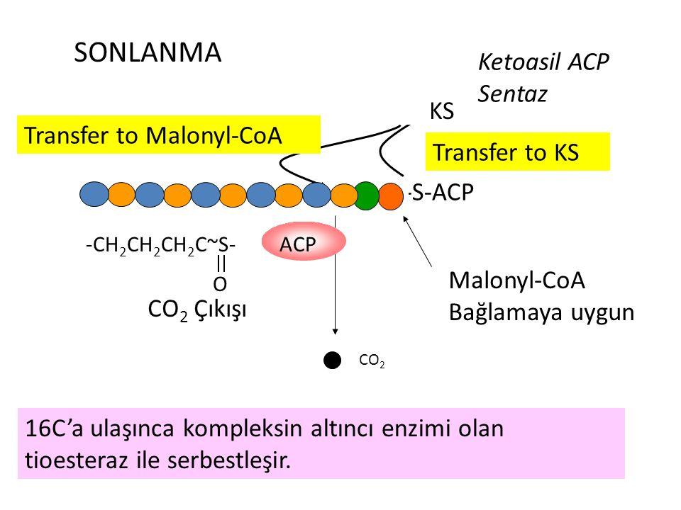 SONLANMA Ketoasil ACP Sentaz -KS Transfer to Malonyl-CoA