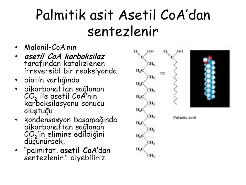 Palmitik asit Asetil CoA'dan sentezlenir