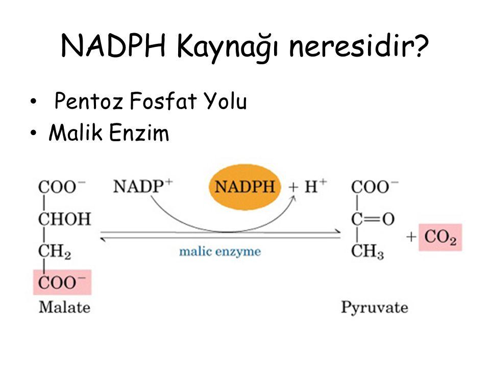NADPH Kaynağı neresidir