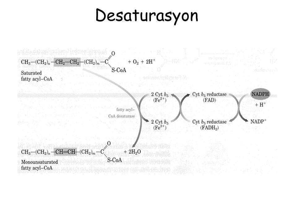 Desaturasyon
