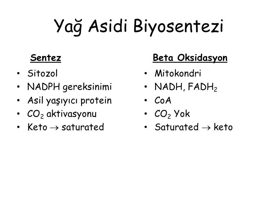 Yağ Asidi Biyosentezi Sentez Beta Oksidasyon Sitozol NADPH gereksinimi