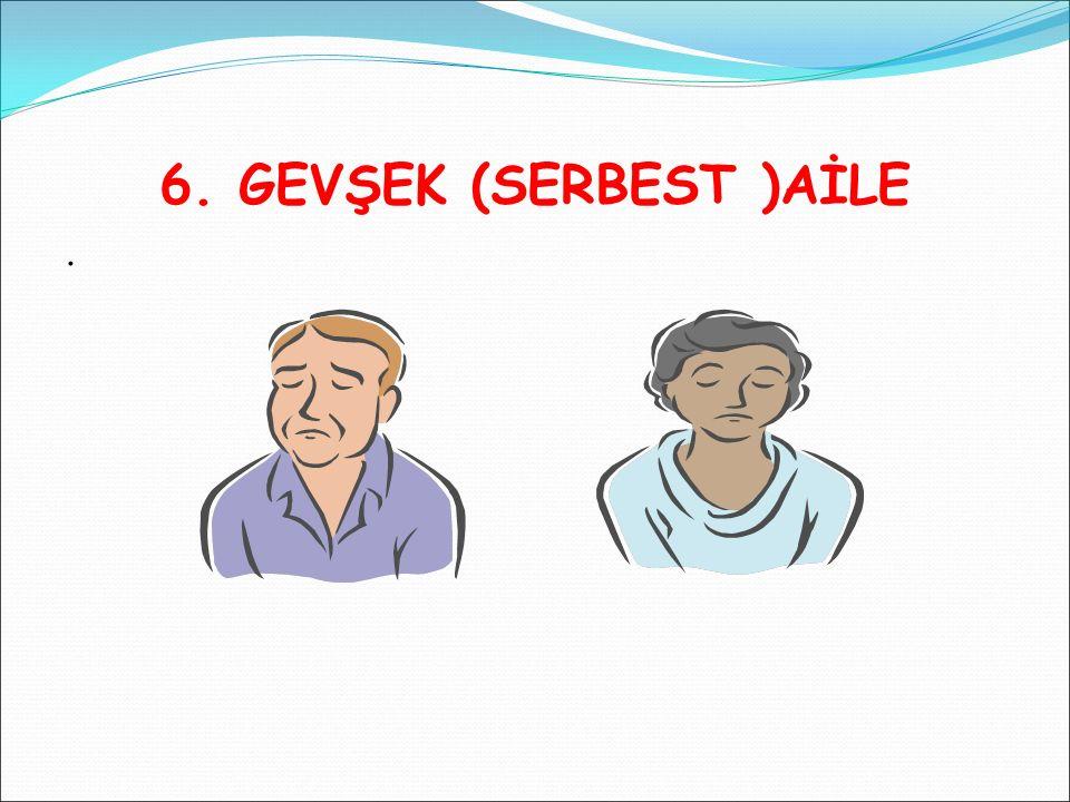 6. GEVŞEK (SERBEST )AİLE .