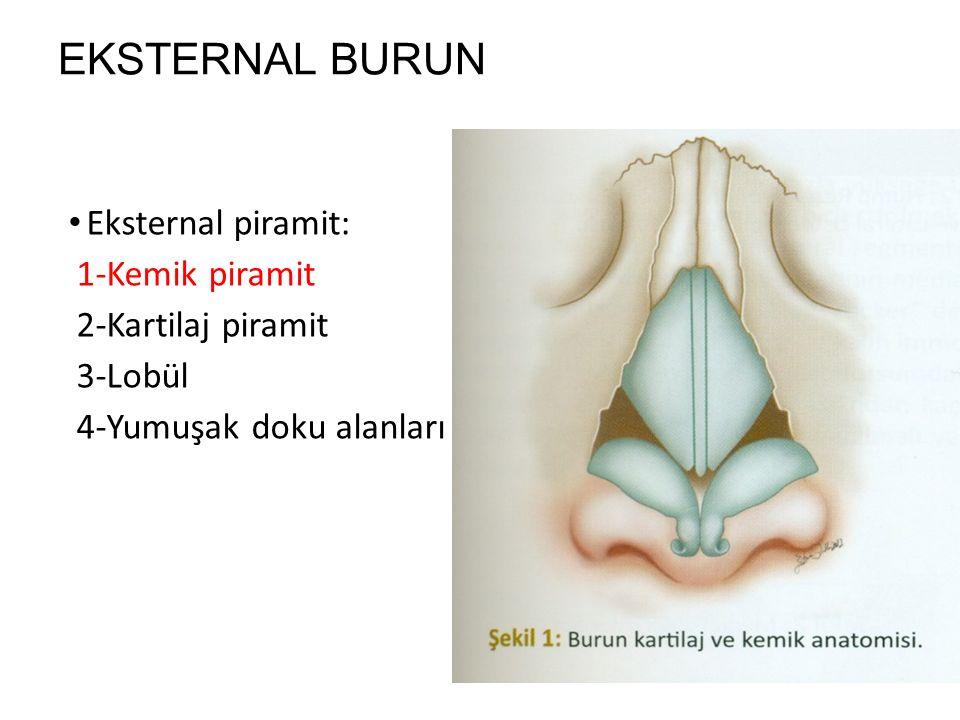 EKSTERNAL BURUN Eksternal piramit: 1-Kemik piramit 2-Kartilaj piramit