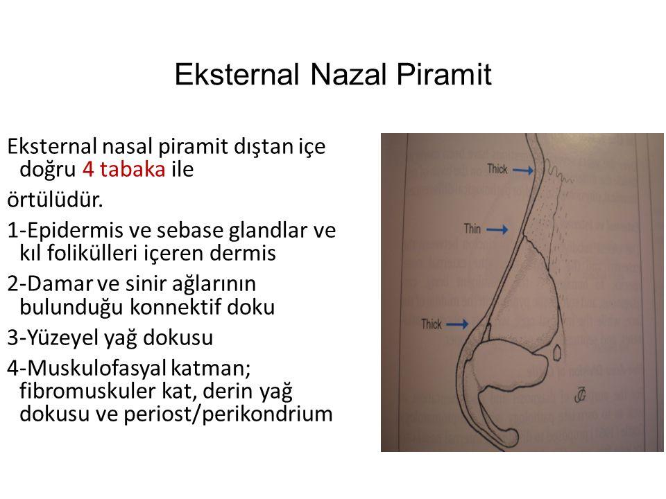 Eksternal Nazal Piramit