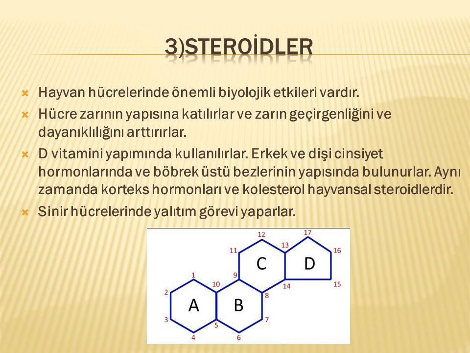 3)Steroİdler Hayvan hücrelerinde önemli biyolojik etkileri vardır.
