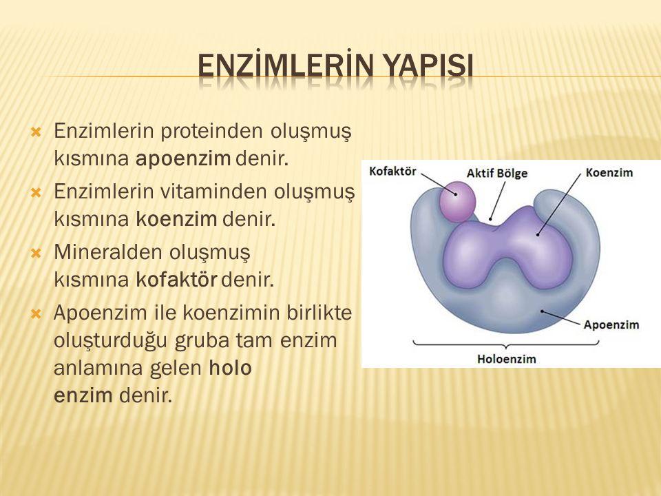 Enzİmlerİn yapisi Enzimlerin proteinden oluşmuş kısmına apoenzim denir. Enzimlerin vitaminden oluşmuş kısmına koenzim denir.
