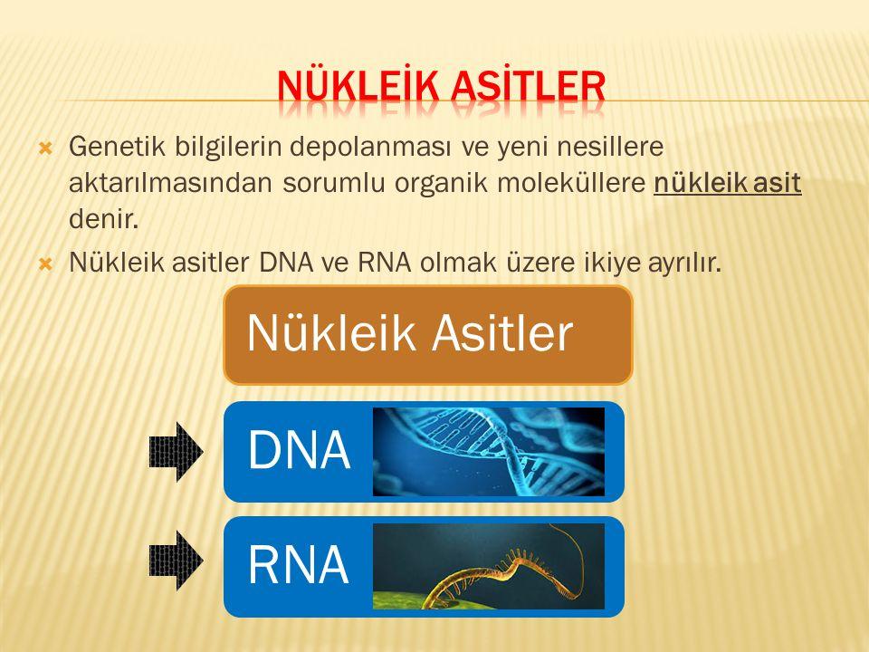 NÜKLEİK ASİTLER Genetik bilgilerin depolanması ve yeni nesillere aktarılmasından sorumlu organik moleküllere nükleik asit denir.