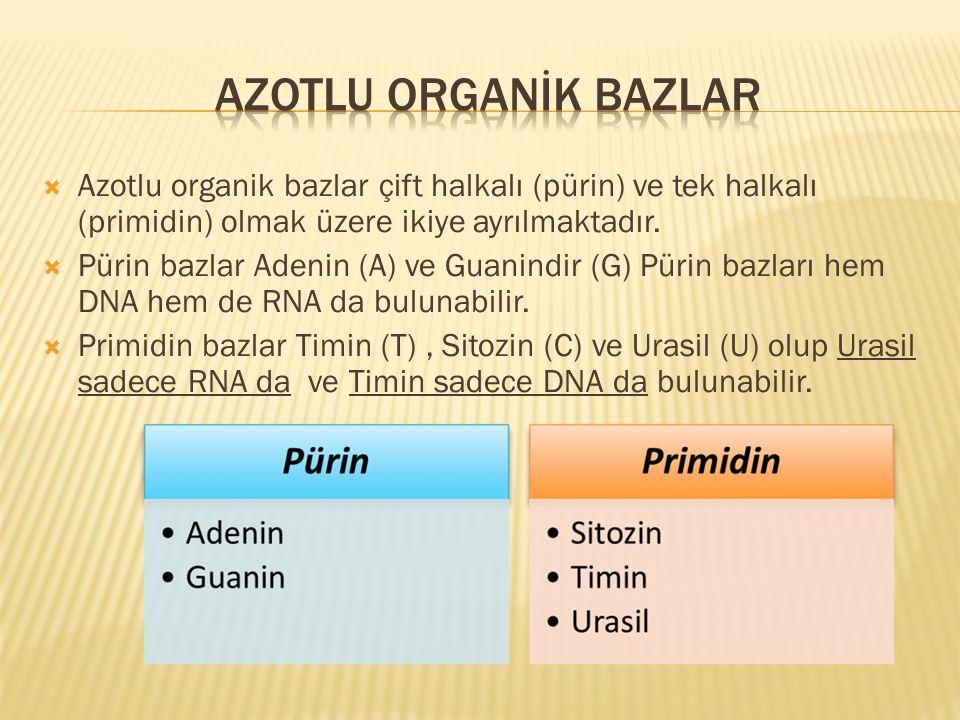 AZOTLU ORGANİK BAZLAR Azotlu organik bazlar çift halkalı (pürin) ve tek halkalı (primidin) olmak üzere ikiye ayrılmaktadır.