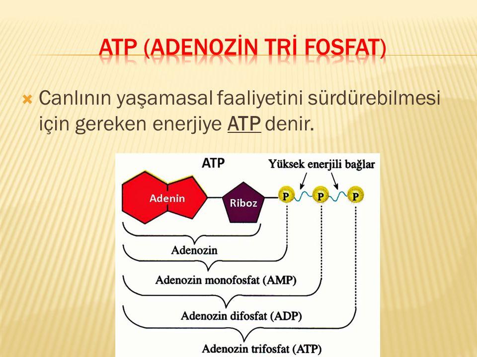 atp (adenozİN trİ FOSFAT)