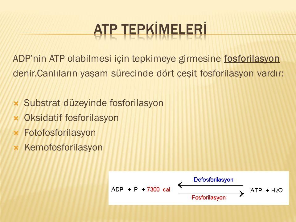 Atp TEPKİMELERİ ADP'nin ATP olabilmesi için tepkimeye girmesine fosforilasyon. denir.Canlıların yaşam sürecinde dört çeşit fosforilasyon vardır: