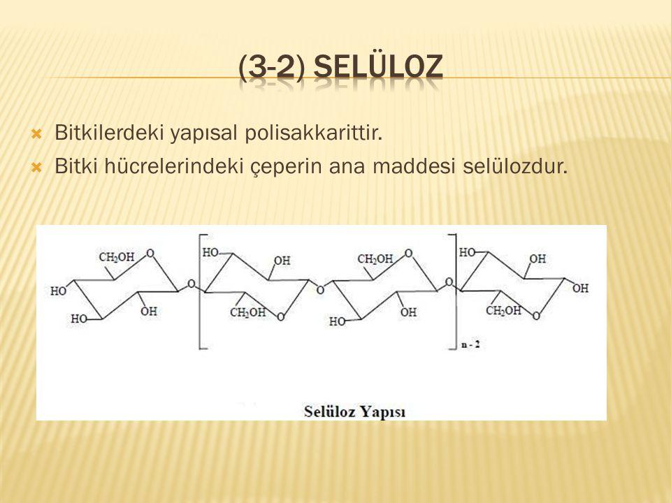 (3-2) Selüloz Bitkilerdeki yapısal polisakkarittir.