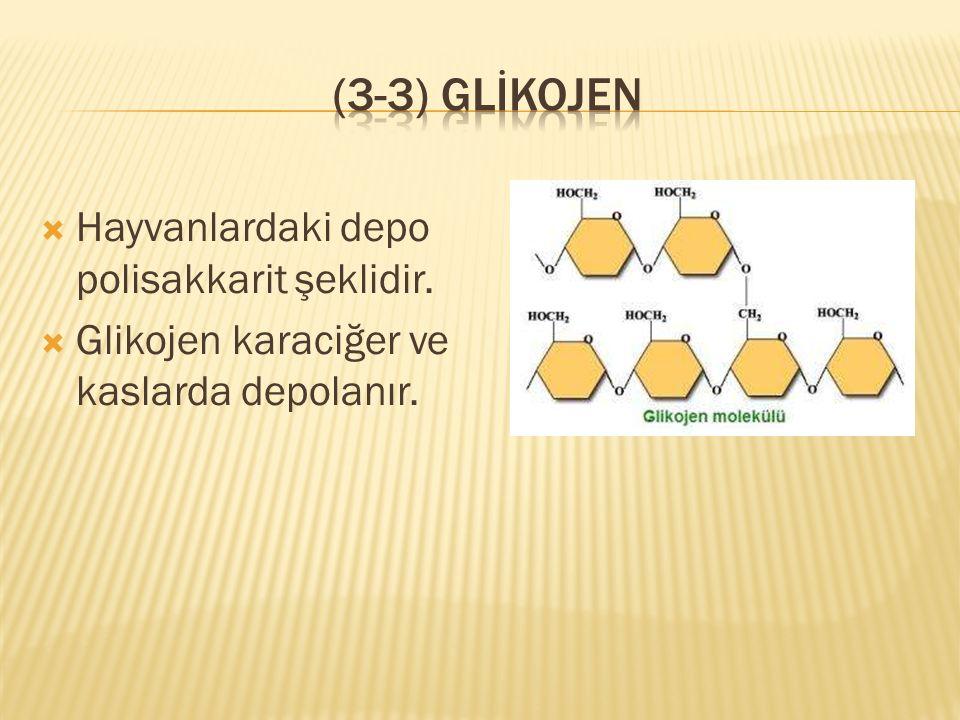 (3-3) Glİkojen Hayvanlardaki depo polisakkarit şeklidir.