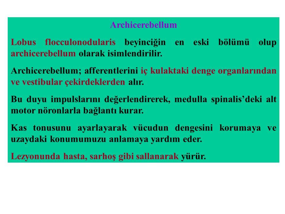 Archicerebellum Lobus flocculonodularis beyinciğin en eski bölümü olup archicerebellum olarak isimlendirilir.
