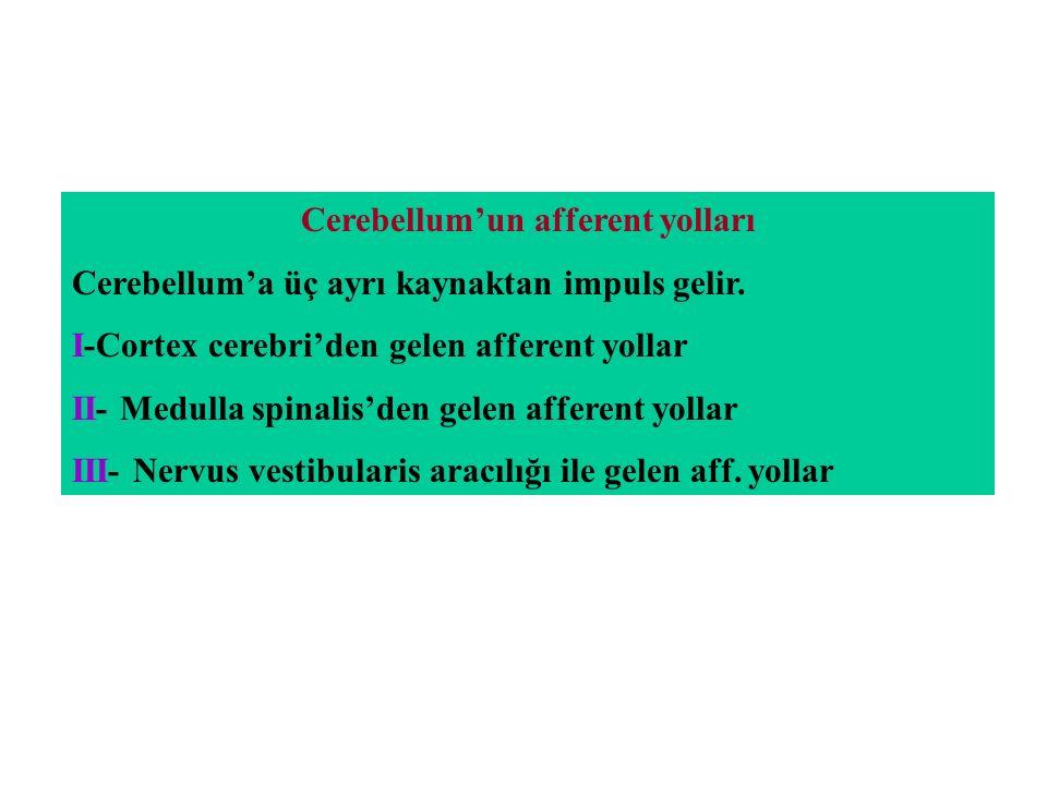 Cerebellum'un afferent yolları
