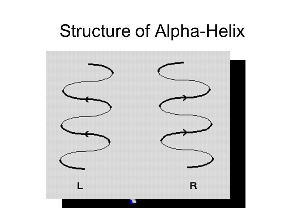 Structure of Alpha-Helix