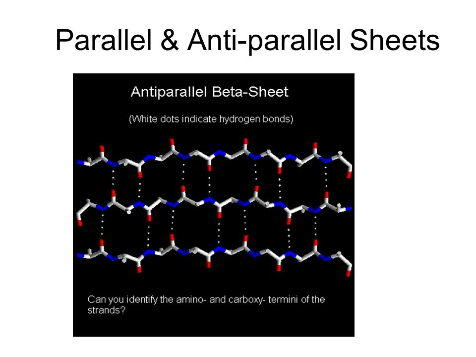 Parallel & Anti-parallel Sheets