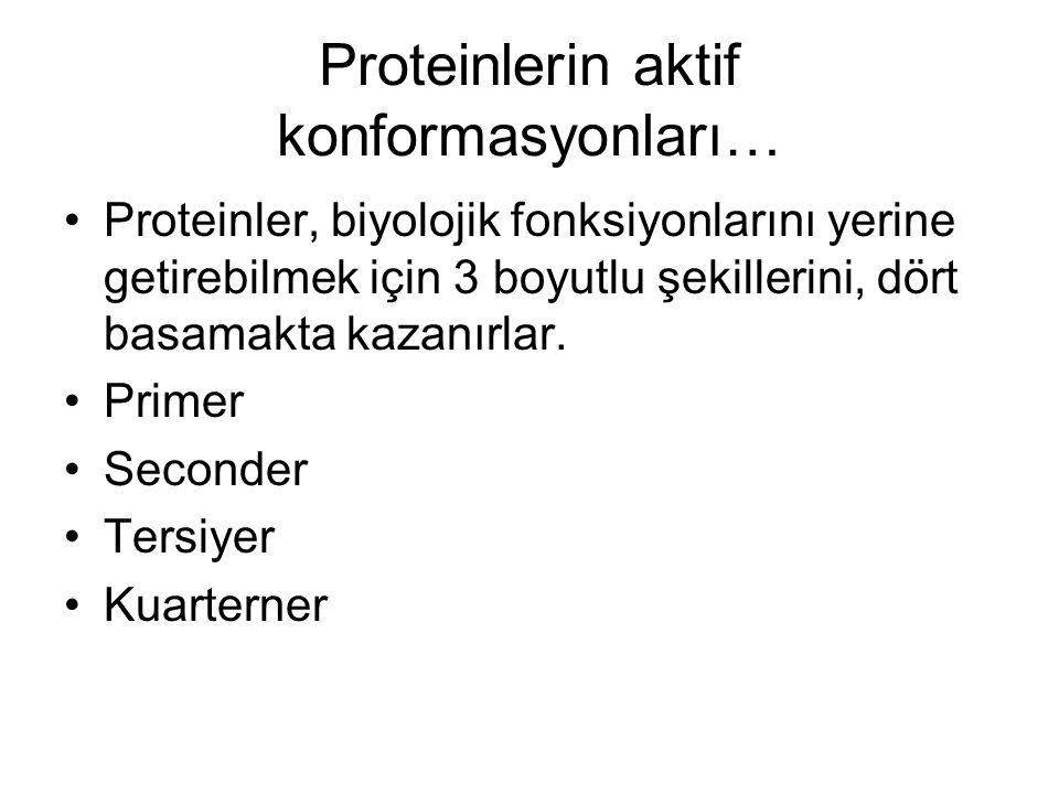 Proteinlerin aktif konformasyonları…