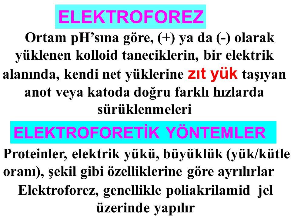 Elektroforez, genellikle poliakrilamid jel üzerinde yapılır
