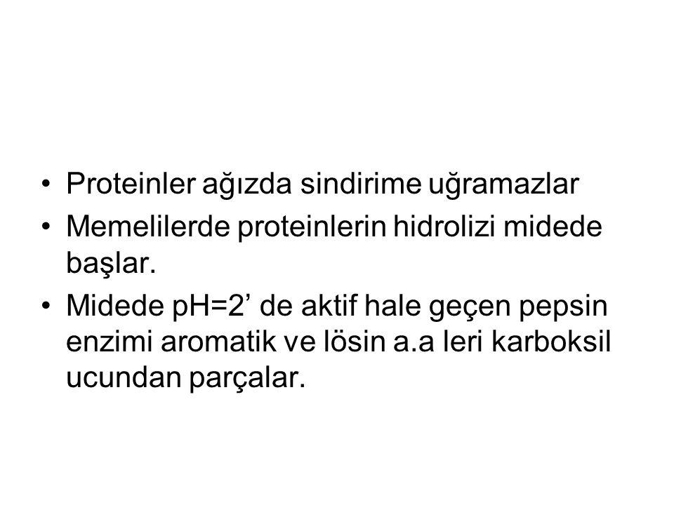 Proteinler ağızda sindirime uğramazlar