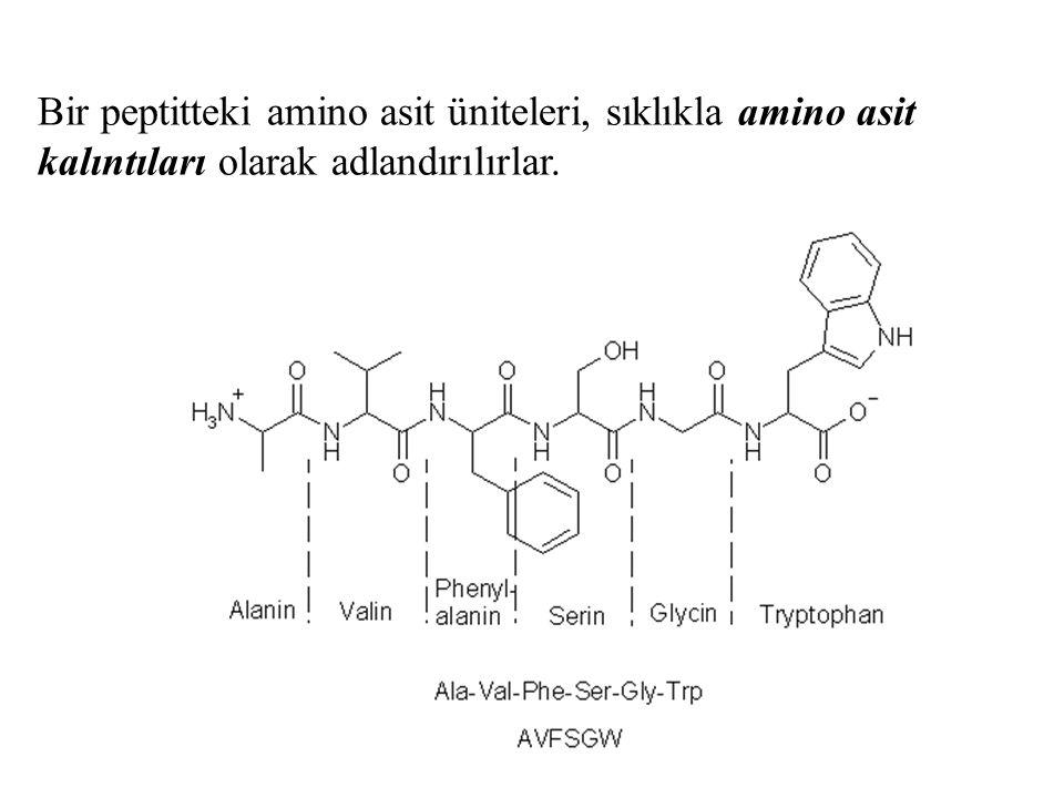 Bir peptitteki amino asit üniteleri, sıklıkla amino asit kalıntıları olarak adlandırılırlar.