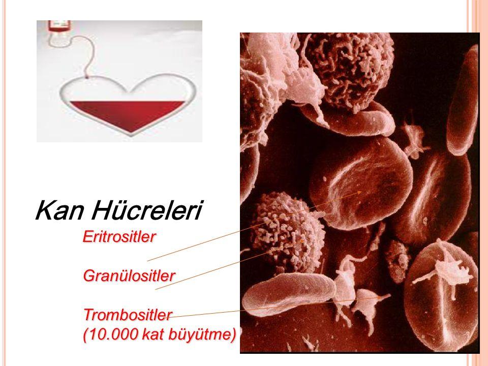 Kan Hücreleri. Eritrositler. Granülositler. Trombositler. (10