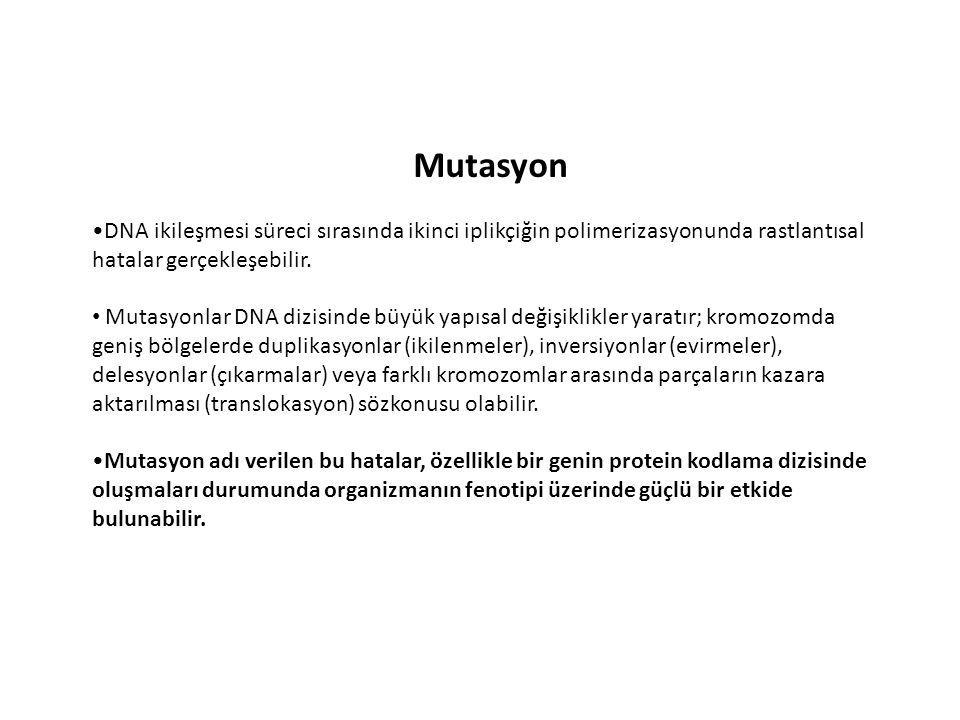 Mutasyon •DNA ikileşmesi süreci sırasında ikinci iplikçiğin polimerizasyonunda rastlantısal hatalar gerçekleşebilir.