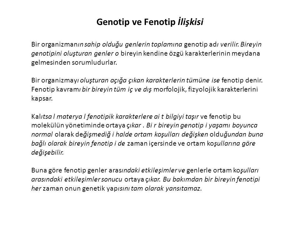 Genotip ve Fenotip İlişkisi