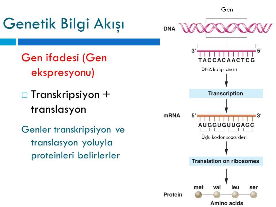 Genetik Bilgi Akışı Gen ifadesi (Gen ekspresyonu)