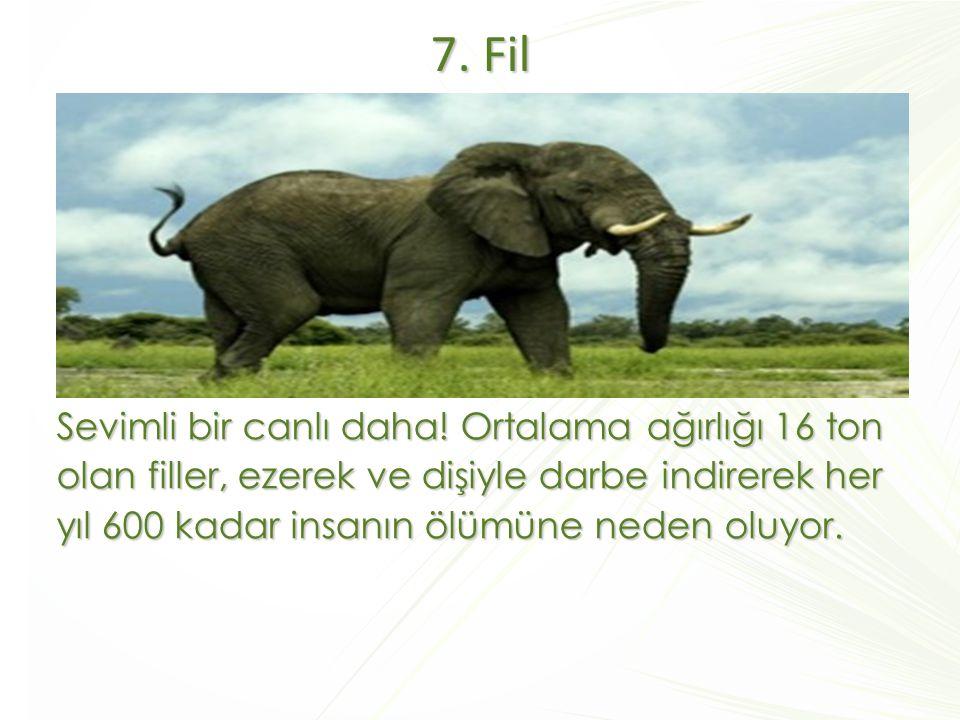 7. Fil