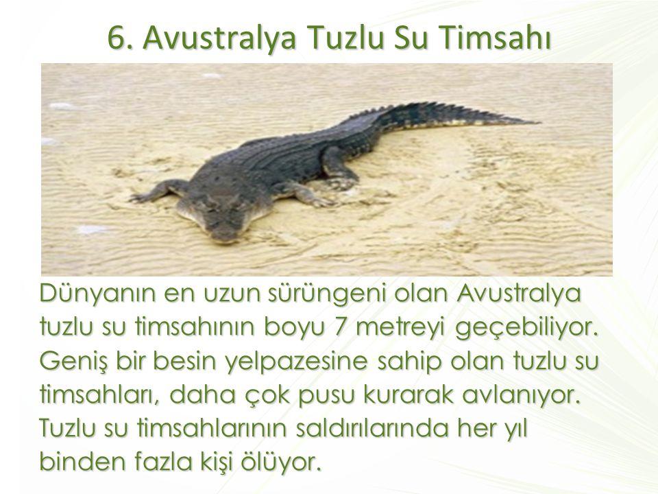 6. Avustralya Tuzlu Su Timsahı