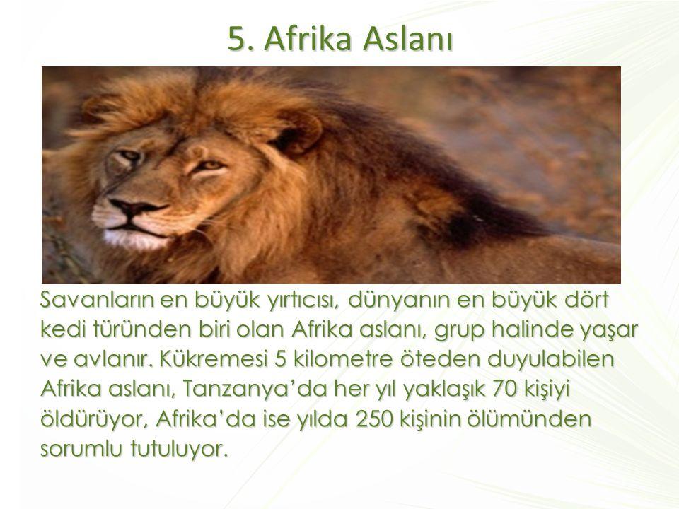 5. Afrika Aslanı
