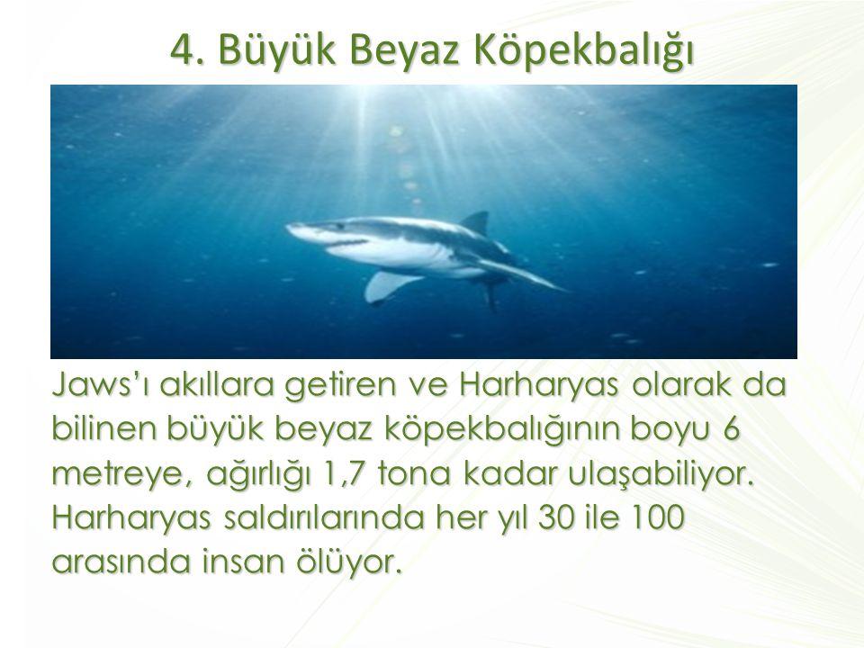 4. Büyük Beyaz Köpekbalığı