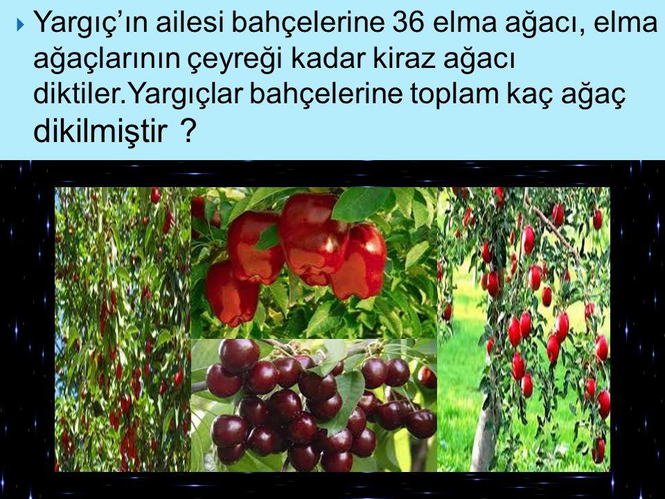 Yargıç'ın ailesi bahçelerine 36 elma ağacı, elma ağaçlarının çeyreği kadar kiraz ağacı diktiler.Yargıçlar bahçelerine toplam kaç ağaç dikilmiştir