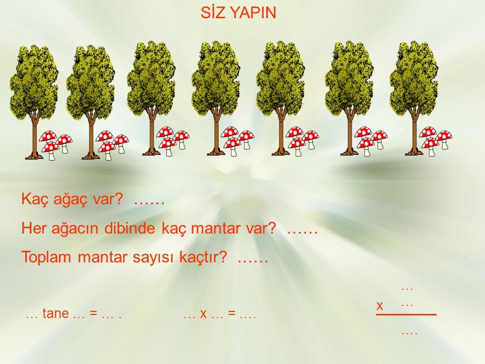 Her ağacın dibinde kaç mantar var …… Toplam mantar sayısı kaçtır ……