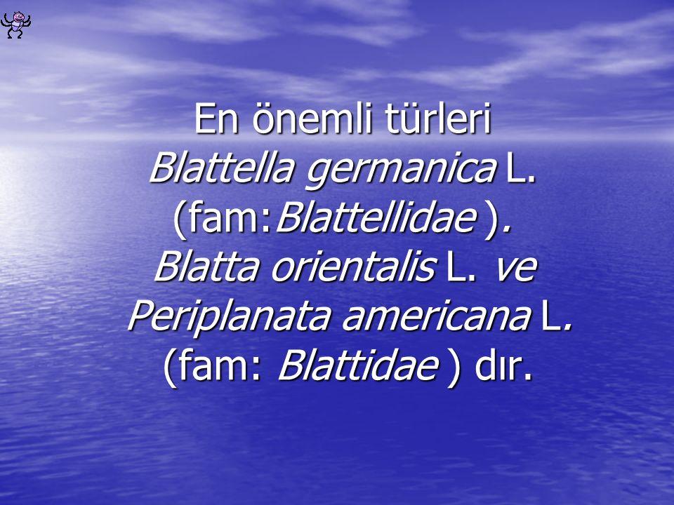 En önemli türleri Blattella germanica L. (fam:Blattellidae )