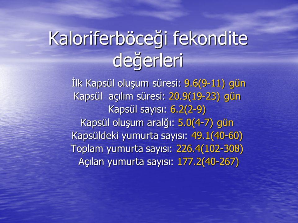 Kaloriferböceği fekondite değerleri