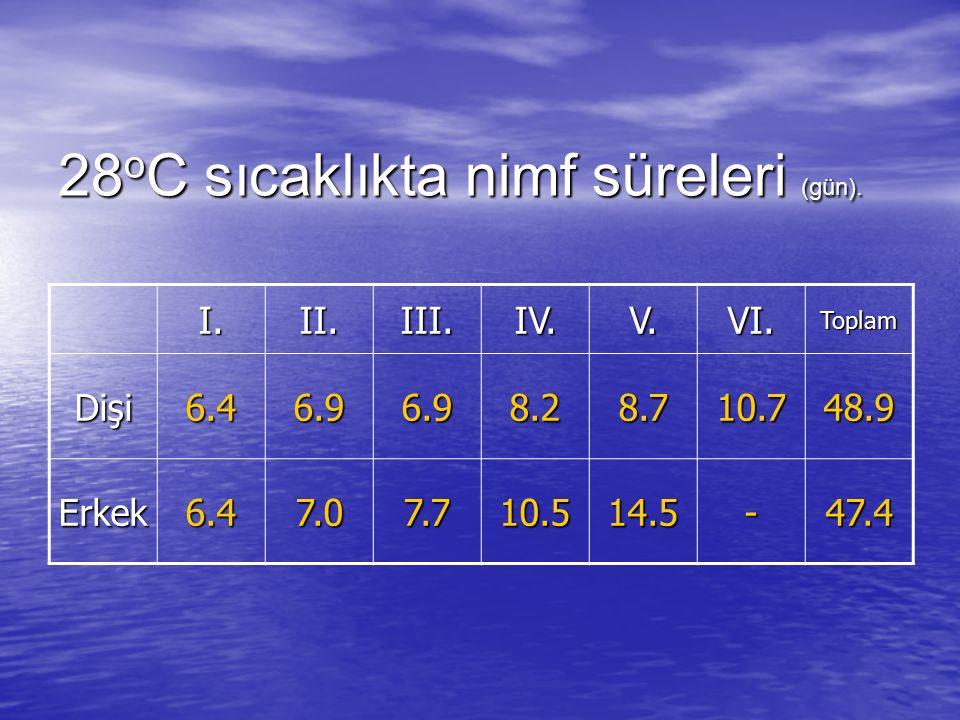 28oC sıcaklıkta nimf süreleri (gün).
