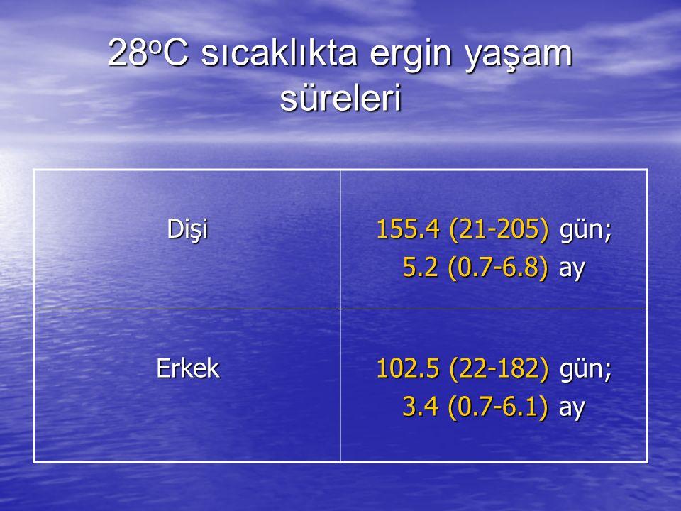 28oC sıcaklıkta ergin yaşam süreleri